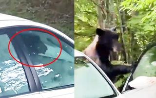 Video: Gấu đột nhập phá hỏng ô tô của người đi nghỉ mát