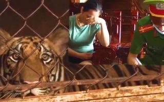Video: Bắt tạm giam người nuôi cả đàn hổ trái phép trong nhà ở Nghệ An