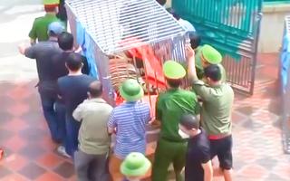 Video: Vụ bắt 17 con hổ nuôi nhốt ở Nghệ An, 8 con đã chết, hiện đang cấp đông để phục vụ điều tra