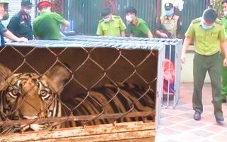 Video: Vụ nuôi cả đàn hổ ở Nghệ An, Đoàn liên ngành từng kiểm tra nhưng không phát hiện