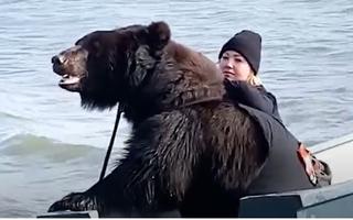 Video: Cô gái nổi tiếng vì nuôi con gấu khổng lồ làm thú cưng