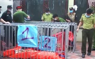 Video: Nguyên nhân dẫn đến hổ chết ở Nghệ An vẫn chưa được xác định chính xác