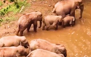 Video: Sau câu chuyện 'voi đi tìm thức ăn 500km', xây dựng trung tâm thức ăn 67ha