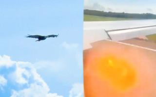 Video: Máy bay chở khách của Nga bị cháy động cơ do va phải chim đại bàng