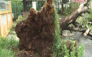 Đà Nẵng tan hoang sau bão