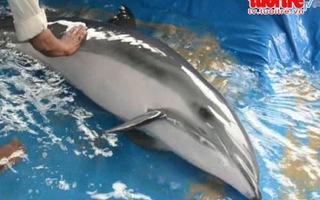 Cá heo 100kg dạt vào bờ