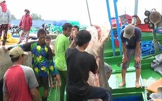 Ngập khoang cá mập từ ngư trường Hoàng Sa