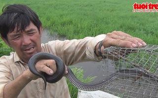 Sài Gòn… săn độc xà