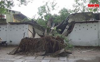 Cây ngã đè sập 2 phòng làm việc tại Cung văn hóa Lao động TPHCM