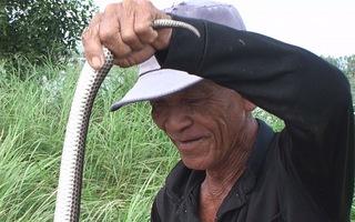 Hẩm hiu nghề bắt rắn, cá mùa lũ kém