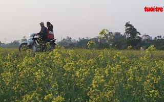 Giới trẻ nô nức kéo về Thái Bình xem hoa cải phủ vàng quê lúa