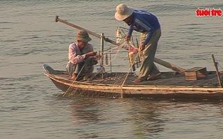 Săn cá bông lau ngày đầu năm mới