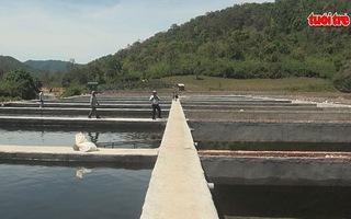 Tìm cách xử lý trang trại nuôi cá tầm trái phép ở rừng đầu nguồn