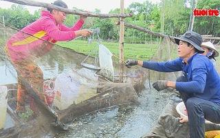 Săn cá linh non đầu mùa lũ