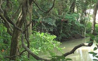 """""""Lạc lối"""" giữa khu bảo tồn lan rừng Troh Bư"""