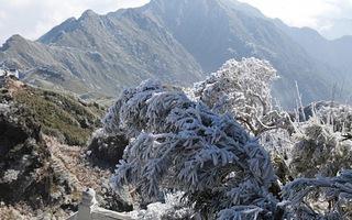 Tuyết đang rơi trên đỉnh Fansipan