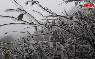 Clip: Mưa tuyết trút xuống Sa Pa, Lào Cai