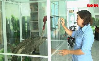 Sếu đầu đỏ quay trở lại Vườn quốc gia Tràm Chim sau 18 năm