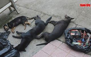 Bắt 2 nghi phạm trộm chó đang trên đường đi tiêu thụ
