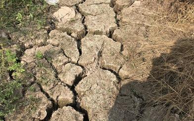 Chủ trạm bơm 'tháo chạy' vì lỗ, nông dân khóc ròng vì thiếu nước