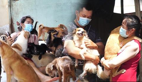Góc nhìn trưa nay | Cô gái cưu mang hơn 100 con chó mèo có chủ là F0 trong mùa dịch