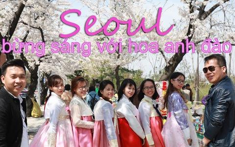 Seoul bừng sáng với hoa anh đào