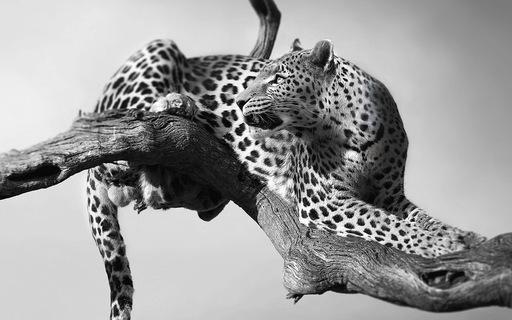Động vật hoang dã biến mất, chúng ta cũng không còn