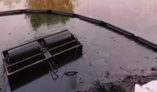 Video tràn dầu giết hàng ngàn sinh vật ở Colombia