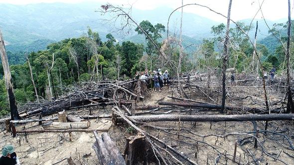 Dừng chuyển mục đích sử dụng rừng