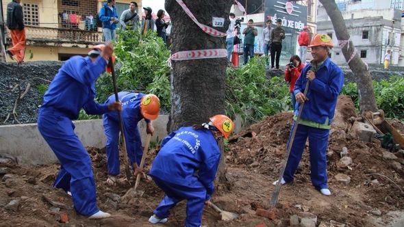 Hà Nội chuyển, chặt gần 1.300 cây xanh để thi công đường vành đai 3