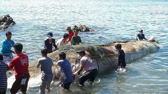 Phát hiện xác cá ông dài hơn 13 mét ngoài biển Nam Du