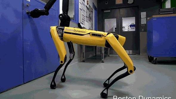 Chó robot biết mở cửa và dùng chân giữ cửa như thật