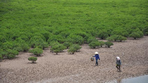 Ngắm rừng ngập mặn trước nguy cơ 'nhường chỗ cho công nghiệp'