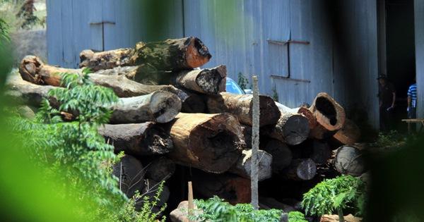 """Cả ngàn cây gỗ quý trong kho xưởng của trùm Phượng """"râu"""""""