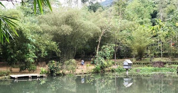 'Hòn ngọc' Sơn Trà từng có vườn thực nghiệm - Tuổi Trẻ Online