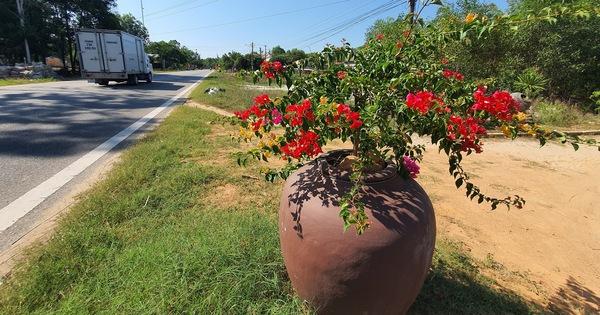 Trồng hoa trong lu dọc đường: đa số người dân ủng hộ vì 'đẹp đường sá, đẹp làng quê'