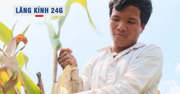 Lăng kính 24g: Nông dân thất thu vì hàng chục hecta trồng giống bắp mới không có hạt