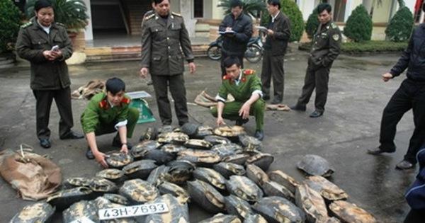 Bắt giữ hơn 700kg kỳ đà và rùa trái phép