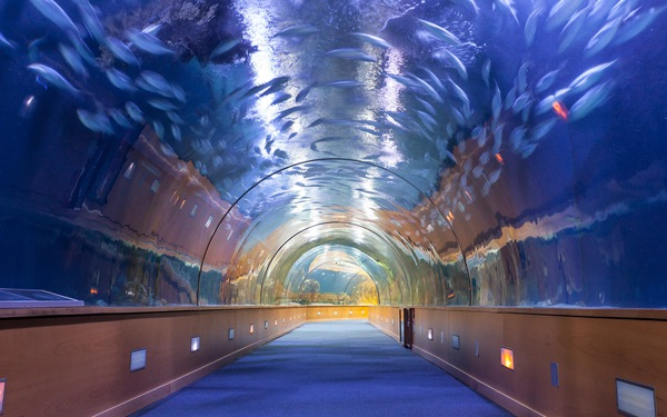 Dubai sử dụng thủy cung ảo để kiểm tra an ninh tại sân bay