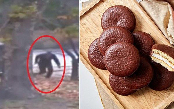 Đằng sau việc anh lính Triều Tiên đào tẩu xin bánh Choco Pie