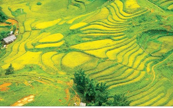 Bài dự thi Bản sắc Việt: Sa Pa có một mùa vàng