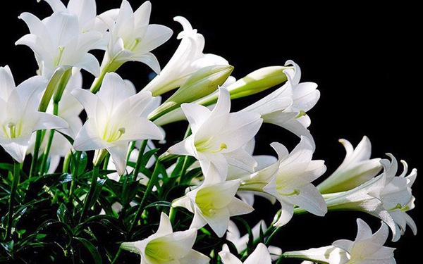 Ngày tết tránh chưng hoa độc