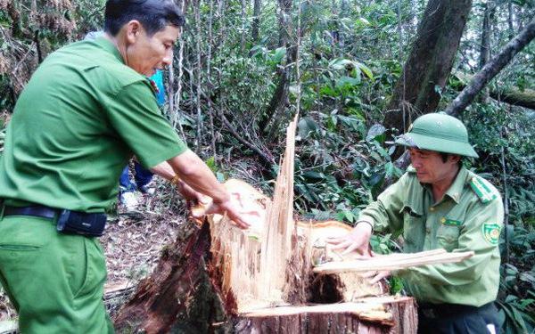 Đề nghị 30 đến 42 tháng tù với cựu đại úy biên phòng phá rừng