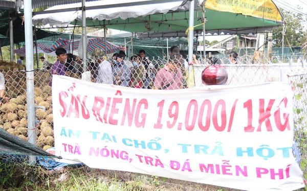 Ùn ùn đi ăn sầu riêng 'siêu rẻ', chỉ 19.000 đồng/kg