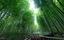 /lac-vao-rung-truc-mu-cang-chai-dep-nhu-phim-kiem-hiep-20200918114911674.htm