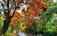 /suoi-ta-ma-ruc-ro-hoa-trang-rung-chua-bao-gio-dep-nhu-nam-nay-20210322114528324.htm
