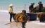 Đến Quảng Ngãi xem ngư dân hái 'lộc biển'