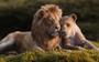 'Vua sư tử' thu 531 triệu USD toàn cầu, phá vỡ hầu hết kỷ lục doanh thu