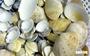 Vỏ sò, vỏ ốc: nguyên liệu tuyệt vời, thanh lịch và rất dễ dàng tìm thấy