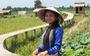 Những người trẻ lội ngược dòng ở miền Tây - Kỳ 3: Về Đồng Tháp Mười xưa với cô gái 23 tuổi